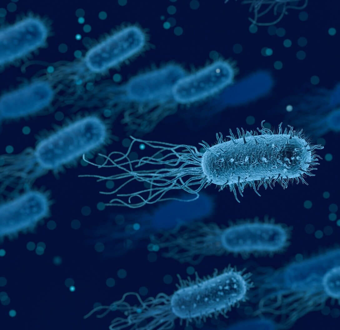 Mayly Life Science bacteria - research